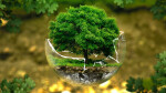 Подборка материала по теме «TOEFL Environmental Science»
