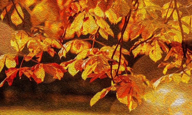 "План урока ""Golden Autumn"""