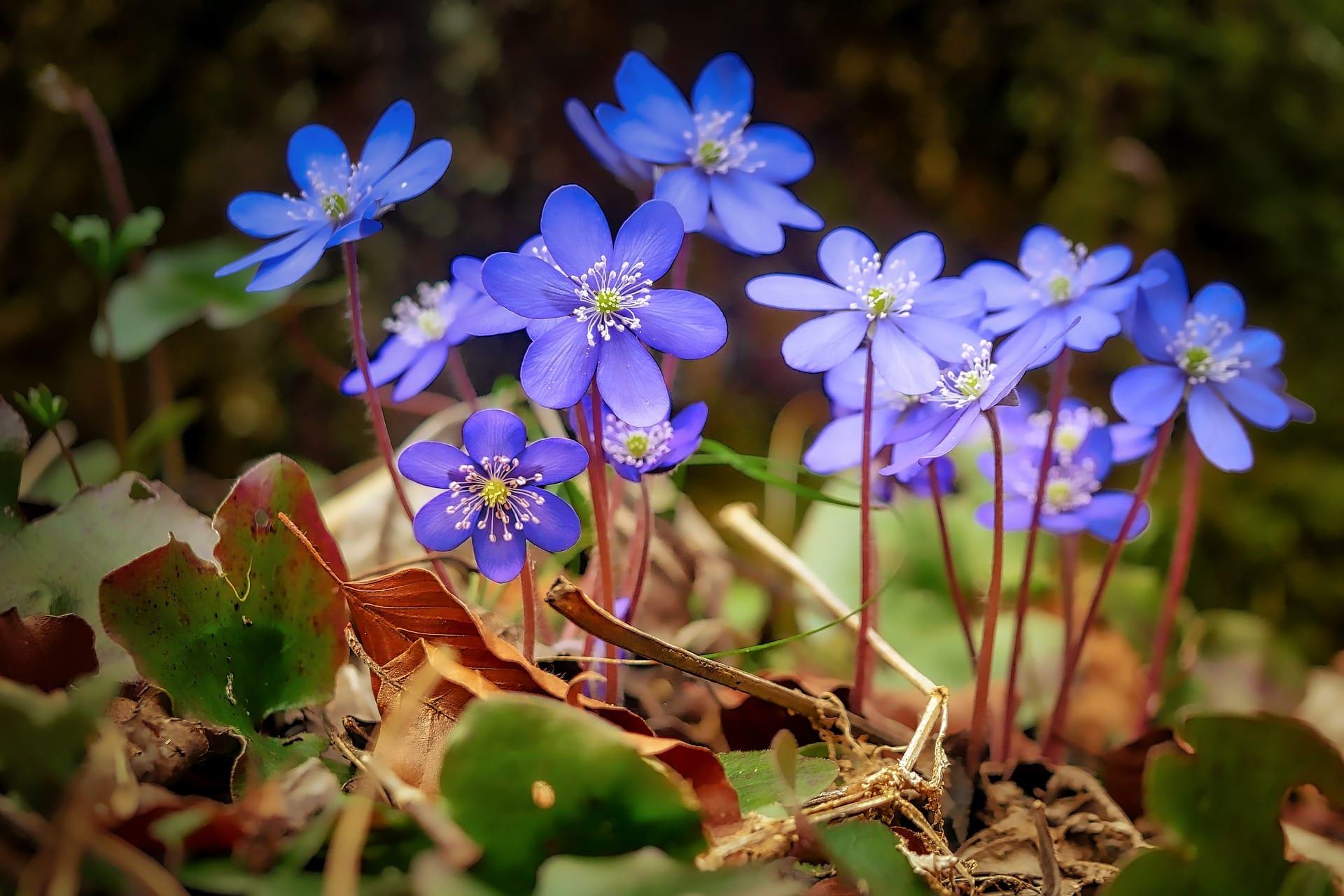 План урока «Spring Blossom»