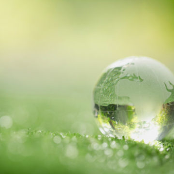 World Environment Day: How well do you know our environment? (test)
