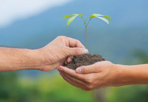 Lesson Plan: Ecology (Worksheet)
