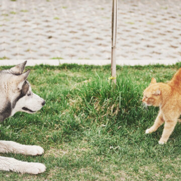 Разговорный клуб «Кошатники vs собачники»