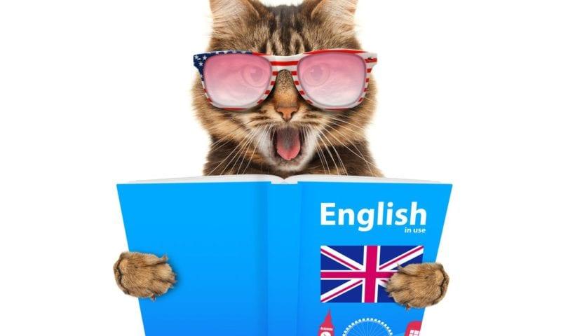 Смеемся и учимся: использование забавных историй и юмора в обучении английскому языку